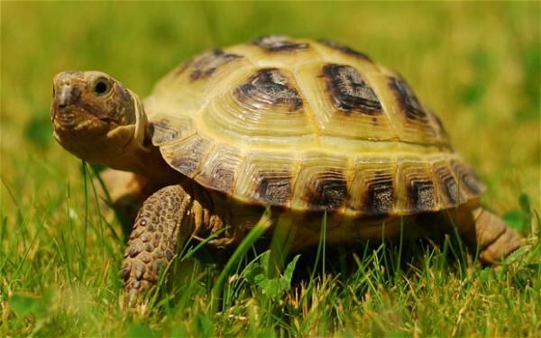 slow-speed